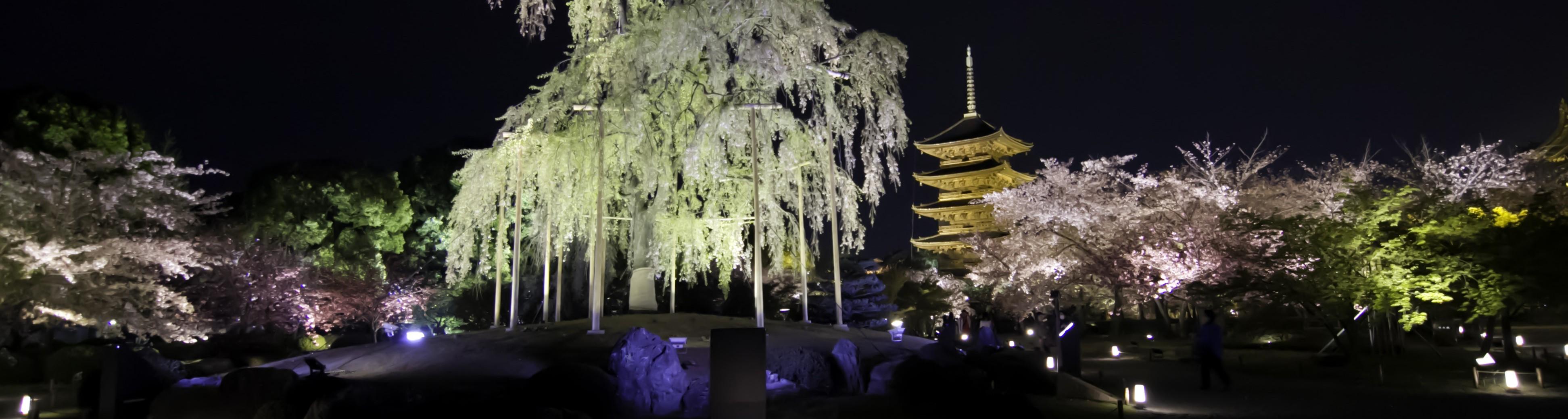 DFS Photography Japan